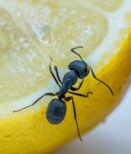 Ant-Extermination