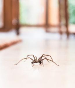 Spider-Extermination
